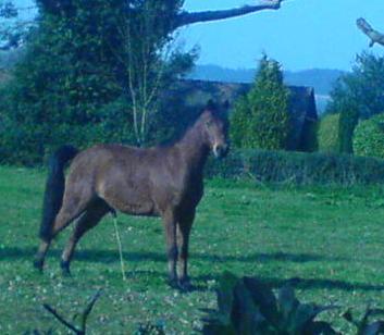 horse-piss2.jpg