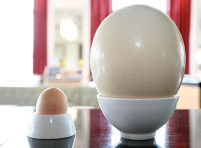 big-egg404_667437c