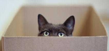 20121113-catster-cat-in-box-video-hero