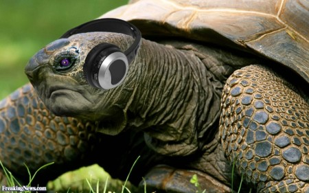 Turtle-Wearing-Headphones-57388