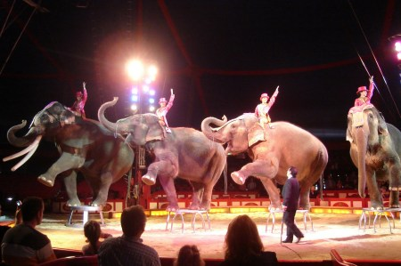 circus-ela